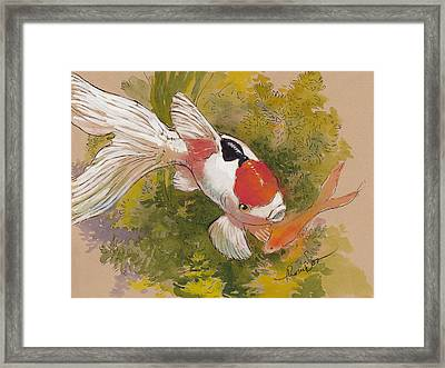 Friendly Fantail Framed Print by Tracie Thompson