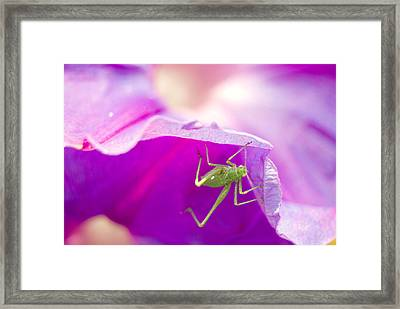 Friends Framed Print by Anna Polishchuk