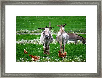 Friends Framed Print by Dawn  De Vos