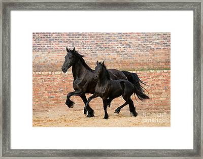 friesian mare and foal photograph by gabriele boiselle. Black Bedroom Furniture Sets. Home Design Ideas