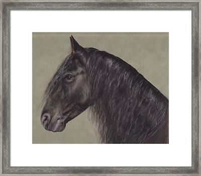 Friesian Wisdom Framed Print by Loreen Pantaleone