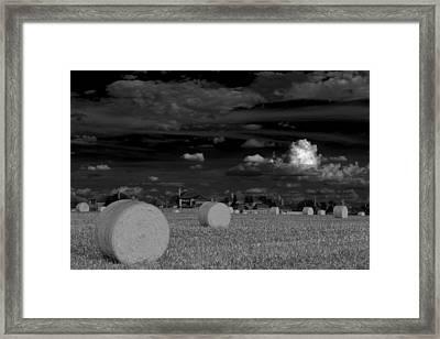 Frisco Dream Framed Print by Darryl Dalton