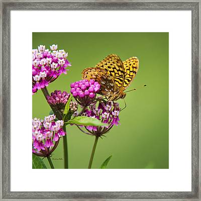 Fritillary Butterfly Square Format Framed Print by Christina Rollo