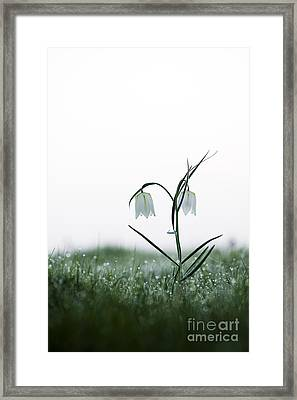 Fritillary In The Mist Framed Print by Tim Gainey