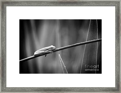 Frog And Insect In Black And White Framed Print by Katya Horner
