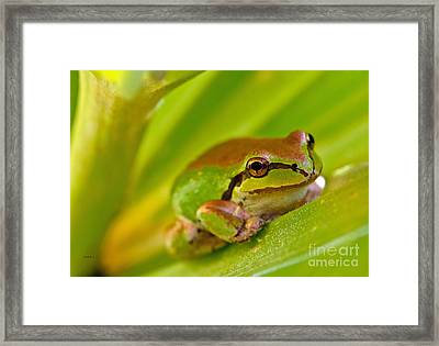 Frog Close Up 3 Framed Print by Mitch Shindelbower