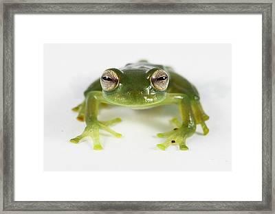 Frog Eyes Framed Print by JP Lawrence
