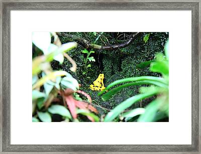 Frog - National Aquarium In Baltimore Md - 12121 Framed Print by DC Photographer
