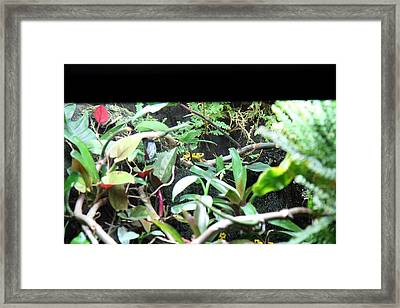 Frog - National Aquarium In Baltimore Md - 12124 Framed Print by DC Photographer