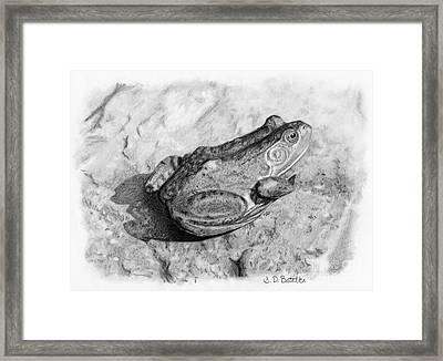Frog On Rock Framed Print by Sarah Batalka