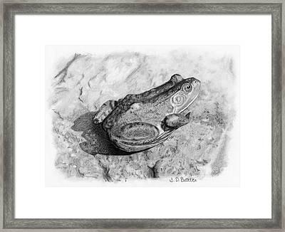 Frog On Rock Framed Print by Sarah Batalka