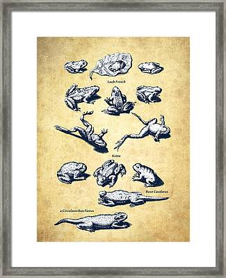 Frogs - Historiae Naturalis - 1657 - Vintage Framed Print by Aged Pixel