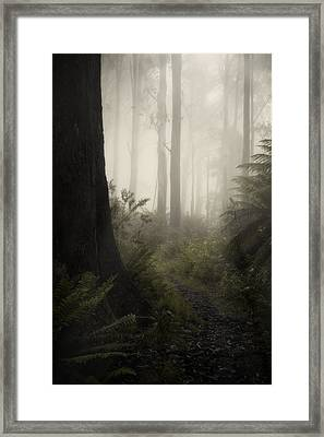 From Darkness Framed Print by Amy Weiss