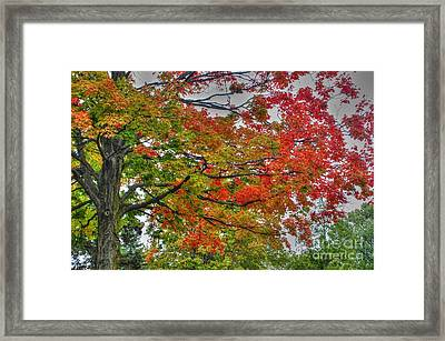 From Green To Red Framed Print by J M Lister