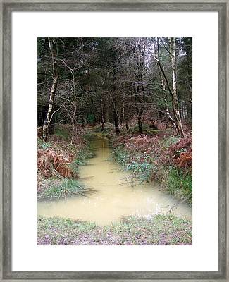 From Green To Yellow Framed Print by Jean Walker