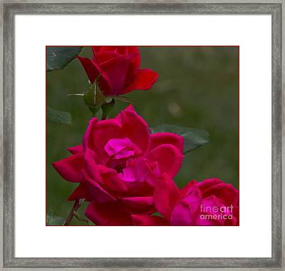From The Heart Framed Print by Timothy J Berndt