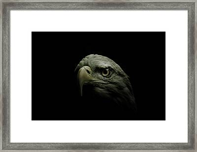 From The Shadows Framed Print by Shane Holsclaw
