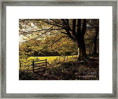 From Woods To Fields Framed Print by Anne Gilbert