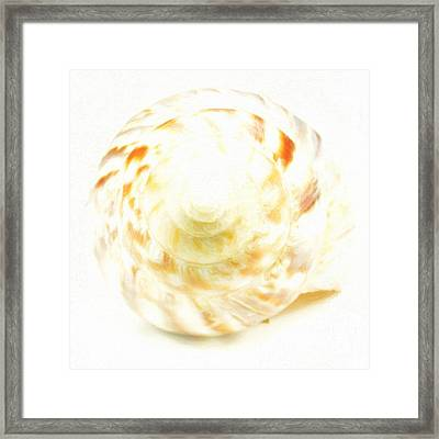 Front Of Sea Shell Framed Print by Toppart Sweden