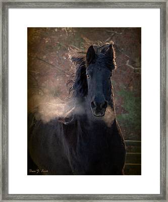 Frost Framed Print by Fran J Scott