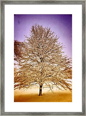 Frosted Branches Framed Print by Marty Koch
