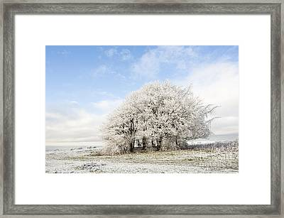 Frosted Copse Framed Print by Anne Gilbert