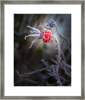 Frosted Framed Print by Jean Noren