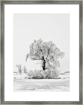 Frosted Framed Print by Mary Jo Allen