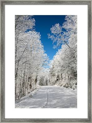 Frosted Winter Framed Print by John Haldane