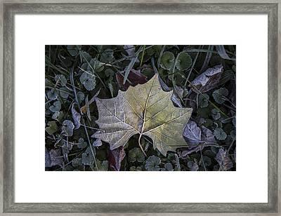 Frosting Framed Print by Debra and Dave Vanderlaan