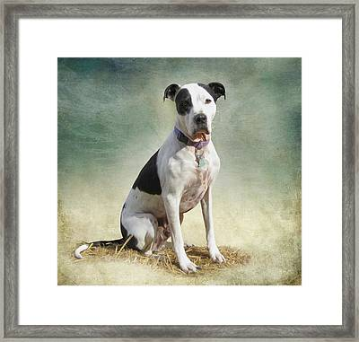 Frosty Framed Print by Julie Wagaman