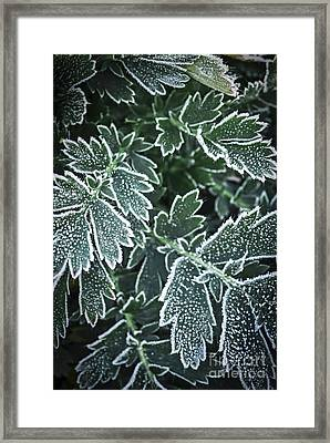 Frosty Leaves In Late Fall Framed Print by Elena Elisseeva