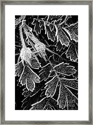 Frosty Plant In Fall Framed Print by Elena Elisseeva