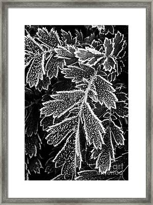 Frosty Plants  Framed Print by Elena Elisseeva