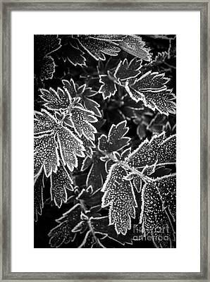 Frosty Plants In Fall Framed Print by Elena Elisseeva