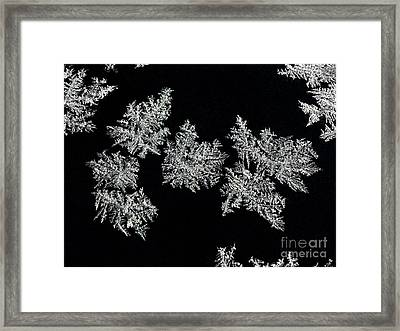 Frosty Snowflakes Framed Print by Mariola Bitner