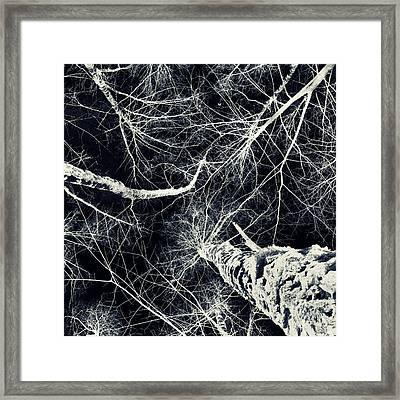 Frozen Framed Print by Stelios Kleanthous