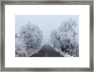 Frozen Trees Framed Print by Darren  White