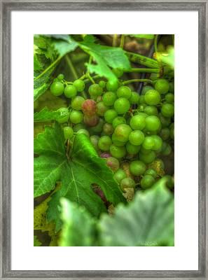 Fruit Bearing Framed Print by Heidi Smith