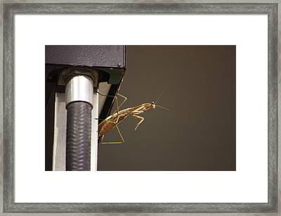 Fueling  Framed Print by Walter  Holland