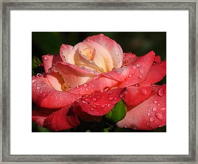 Full Bloom Framed Print by Juergen Roth