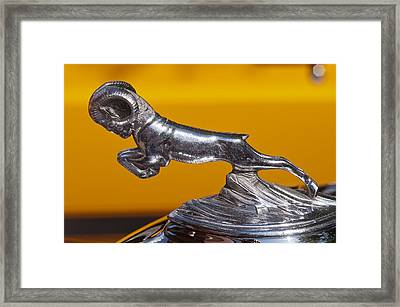 Full Bodied Ram Framed Print by Kurt Golgart