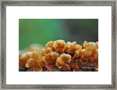 Fungus Growing On Log Framed Print by Dan Friend