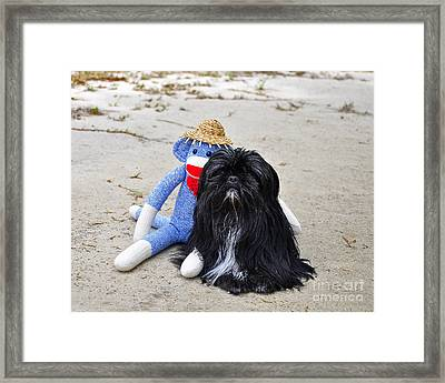 Funky Monkey And Sweet Shih Tzu Framed Print by Al Powell Photography USA