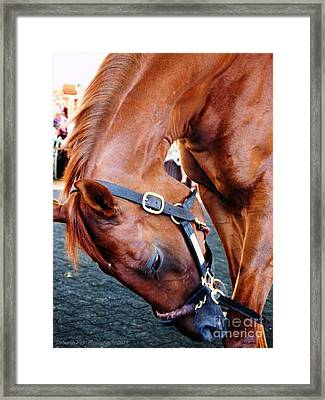 Funny Cide A Champion Framed Print by Deborah Fay