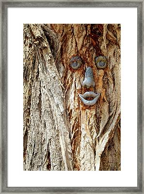 Funny Face On A Tree Trunk, Gallup, New Framed Print by Julien Mcroberts