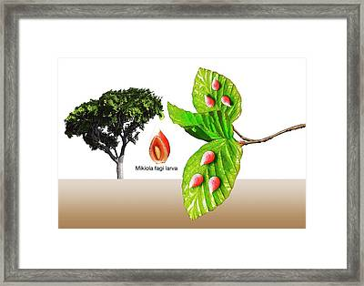 Gall Midge Galls On Beech Tree Framed Print by Mikkel Juul Jensen