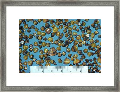 Gall Stones Framed Print by Microscape