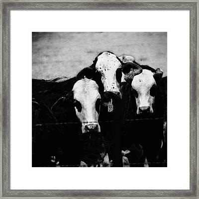 Gangland 1 Framed Print by Wendy J St Christopher