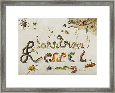 Garden  And House Spiders With Grass Snakes Framed Print by Celestial Images